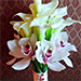 Orchids and Lilies